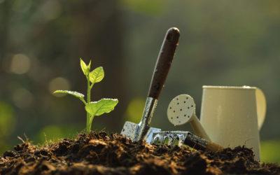 March Newsletter – Garden Chores, Lenten Roses & Gardening Tips