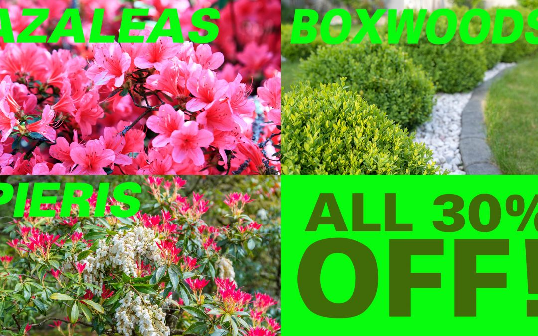 Spring is Here April Sale